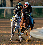 November 1, 2020: Channel Maker, trained by trainer William I. Mott, exercises in preparation for the Breeders' Cup Turf and Tacitus, trained by trainer William I. Mott, exercise in preparation for the Breeders' Cup Classic at Keeneland Racetrack in Lexington, Kentucky on November 1, 2020. Scott Serio/Eclipse Sportswire/Breeders Cup /CSM