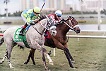 HALLANDALE BEACH, FL - JAN 20:Galleon Mast #5 with Irad Ortiz Jr. on board for trainer David Fawkes and brother Jose Ortiz riding Our Way #1 for trainer H. James Bond vie for the lead heading for the wire in the $150,000 Sunshine Millions Turf Stakes at Gulfstream Park on January 20, 2018 in Hallandale Beach, Florida. Irad Ortiz Jr was the winner. (Photo by Bob Aaron/Eclipse Sportswire/Getty Images)