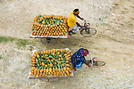 Workers transporting pineapples on bicycles by Ahsanul Haque Nayem