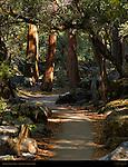 Eastern Approach Trail to Lower Yosemite Falls, Yosemite National Park