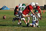 Football action. Lineman hits quarterback causing a fumble.