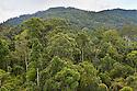 Lowland dipterocarp rainforest. Maliau Basin, Sabah, Borneo, Malaysia.