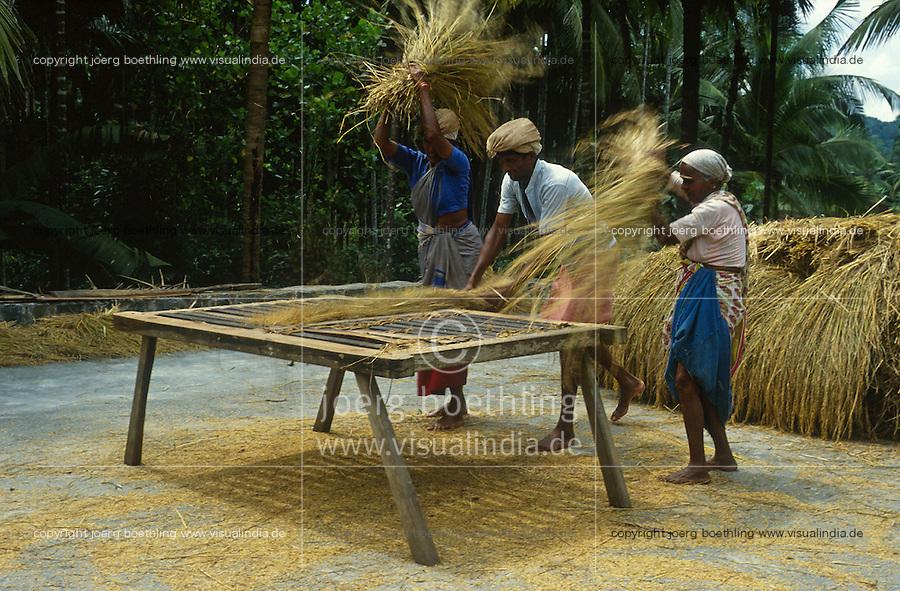 INDIA Karnataka Taccode, farmer trash paddy manual at a farm near Mangalore / INDIEN Taccode, Bauern dreschen Reisbueschel auf einem Gittertisch aus Holz auf einem Bauernhof