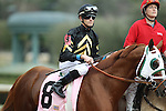 HOT SPRINGS, AR - FEBRUARY 20: #8 Goats Town, with Chris Landeros aboard before the running of the Razorback Handicap at Oaklawn Park on February 20, 2017 in Hot Springs, Arkansas. (Photo by Justin Manning/Eclipse Sportswire/Getty Images)