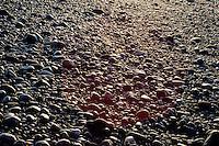 rocks at beach, Homer, Kachemak Bay, Kenai Peninsula Borough, Alaska, USA, March 2000