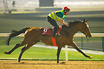 DUBAI,UNITED ARAB EMIRATES-MARCH 29: Parviz,trained by Waldemar Hickst,exercises in preparation for the Dubai Gold Cup at Meydan Racecourse on March 29,2018 in Dubai,United Arab Emirates (Photo by Kaz Ishida/Eclipse Sportswire/Getty Images)
