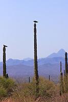 America,Mexico,Baja California