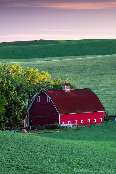 Red barn in green wheat field at sunrise