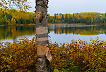 Birch Tree with Fall Colors and Lake in Background