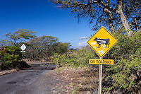 Cattle crossing traffic sign along the road of Pi'ilani Hwy. on the south side of Maui