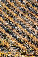La Clape. Languedoc. Vineyard. France. Europe. Graphic diagonal rows of vines.