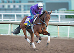 ARCADIA, CA - NOV 02: Beholder, owned by Spendthrift Farm LLC and trained by Richard E Mandella, exercises in preparation for the Breeders' Cup Longines Distaff at Santa Anita Park on November 2, 2016 in Arcadia, California. (Photo by Kazushi Ishida/Eclipse Sportswire/Breeders' Cup)