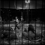 At a local circus a lion and tiger tamer performs, Prague, Czech Republic.