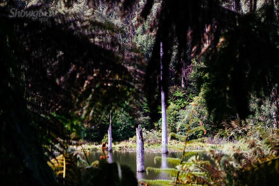 Image Ref: CA585<br /> Location: Lake Elizabeth, Forrest<br /> Date of Shot: 20.10.18