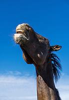 Horse naying.