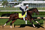 LOUISVILLE, KY - APRIL 24: Shagaf (Bernardini x Muhaawara, by Unbridled's Song) works 4 furlongs in :48.4 at Churchill Downs, Louisville KY in preparation for the Kentucky Derby. Owner Shadwell Stable, trainer Chad C. Brown (Photo by Mary M. Meek/Eclipse Sportswire/Getty Images)