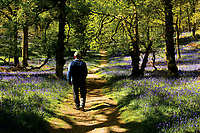 Walking through the Central Valley on Inchcailloch, Loch Lomond and the Trossachs National Park, Stirlingshire
