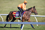 One Master, trained by William John Haggas, exercises in preparation for the Breeders' Cup Mile at Keeneland 11.03.20.