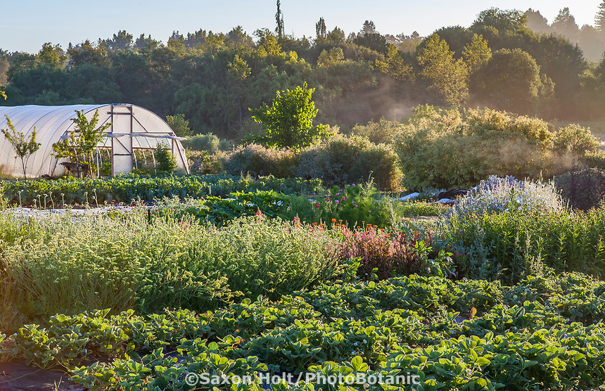 No-till flower and vegetable  farming, Singing Frogs Farm