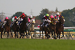 Rose Kingdom wins Japan Cup by the disqualification of Buena Vista