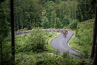 peloton up Le Rosier<br /> <br /> Ster ZLM Tour (2.1)<br /> Stage 4: Hotel Verviers > La Gileppe (Jalhay)(190km)