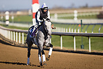 Rushie, trained by Michael W. McCarthy, exercises in preparation for the Breeders' Cup Dirt Mile at Keeneland 11.03.20.