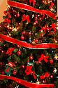 AJ Alexander - Christmas Tree.Photo by AJ Alexander .#0006