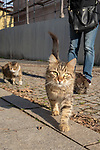 Street Cats In Istanbul