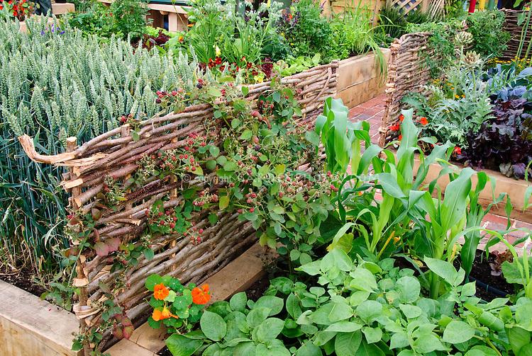 Growing Fruit & vegetables Blackberries berry bushes on willow fence, wheat, corn, nasturtiums