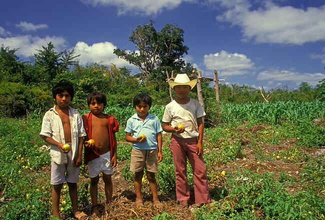 Ethnic Maya boys harvesting tomatoes, Tulum, Quintana Roo State, Yucatan Peninsula, Mexico, North America