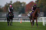 October 31, 2018 : Lightning Spear (GB), trained by David Simcock, exercises in preparation for the Breeders' Cup Mile  at Churchill Downs on October 31, 2018 in Louisville, Kentucky. Evers/ESW/Breeders Cup