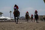 JUL 31,2014:Horses on the polytrack  at Del Mar in Del Mar,CA. Kazushi Ishida/ESW/CSM