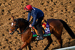 November 5, 2020: Magical, trained by trainer Aidan P. O'Brien, exercises in preparation for the Breeders' Cup Turf at Keeneland Racetrack in Lexington, Kentucky on November 5, 2020. John Voorhees/Eclipse Sportswire/Breeders Cup/CSM
