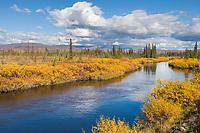 Autumn landscape, Kanuti River, Interior, Alaska