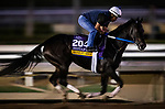 OCT 25: Breeders' Cup Distaff entrant Midnight Bisou, trained by Steven M. Asmussen, at Santa Anita Park in Arcadia, California on Oct 25, 2019. Evers/Eclipse Sportswire/Breeders' Cup