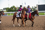 September 19, 2020: #2 Armistice Day, ridden by David Moran and trained by Barbara Minshall heads to the post for the Grade 1 Ricoh Woodbine Mile at Woodbine Racetrack in Toronto, Ontario, Canada.