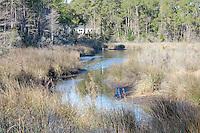 White Crane on Miflin Creek near Foley Alabama on the Gulf Coast