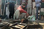 A snake charmer at Sonepur fair ground. Bihar, India, Arindam Mukherjee