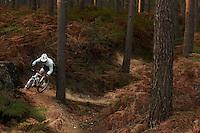 Rider on tank traps trail , Swinley Forest , Bracknell , Berks    October 2011 pic copyright Steve Behr / Stockfile