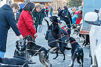Participants in the Iditarod Teacher Conference watch Volunteer veterinarians check over dogs in the parking lot at the 2016 Iditarod Pre-race vet check at Iditarod Headquarters  in Wasilla, Alaska. March 02, 2016 <br /> <br /> © Jeff Schultz/SchultzPhoto.com ALL RIGHTS RESERVED<br /> DO NOT REPRODUCE WITHOUT PERMISSION