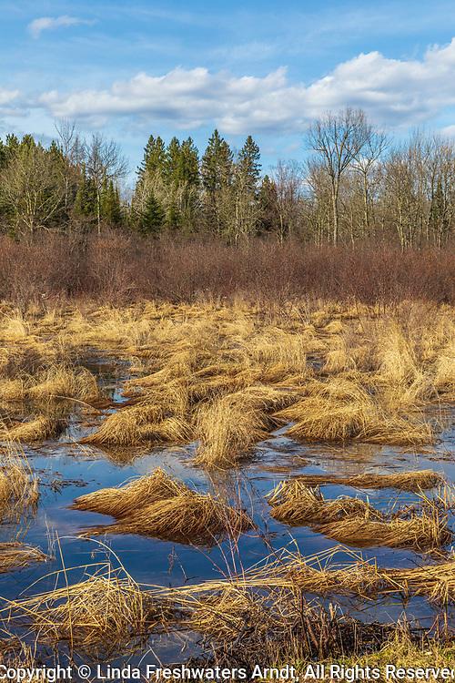 Beautiful light illuminating a northern Wisconsin wetland.