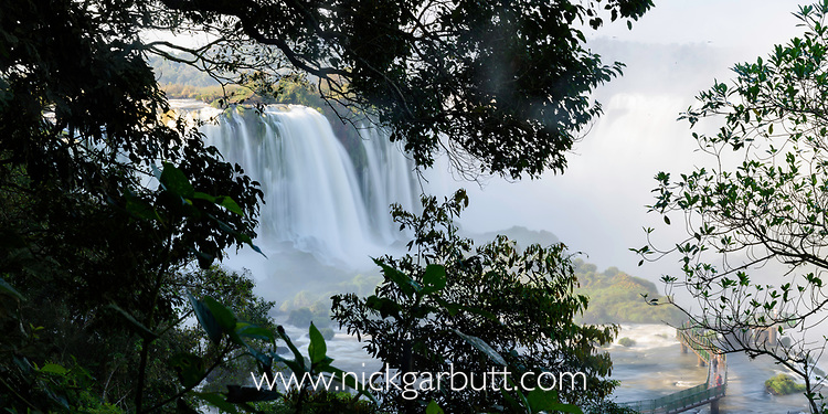 A view through the forest canopy at Iguasu Falls (also Iguazu Falls, Iguazú Falls, Iguassu Falls or Iguaçu Falls) on the Iguasu River, Brazil / Argentina border. Photographed from the Brazilian side of the Falls. State of Paraná, Brasil.