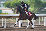 SHA TIN,HONG KONG-DECEMBER 09 : Staphanos,trained by Hideaki Fujiwara,exercises in preparation for the Hong Kong Cup at Sha Tin Racecourse on December 9,2017 in Sha Tin,New Territories,Hong Kong (Photo by Kaz Ishida/Eclipse Sportswire/Getty Images)