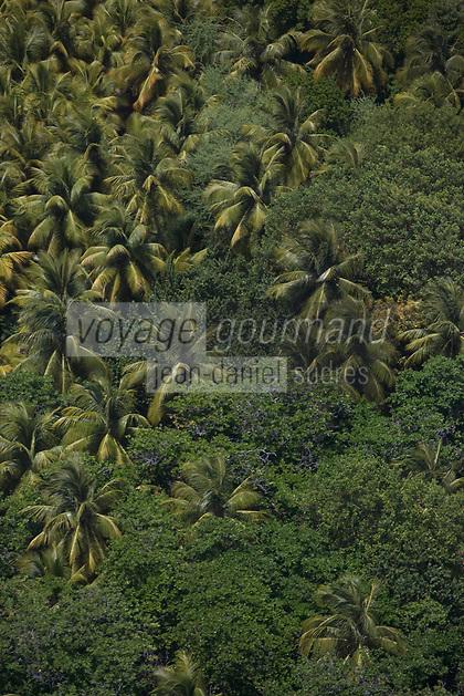 France/DOM/Martinique/Le Francois: Palmiers