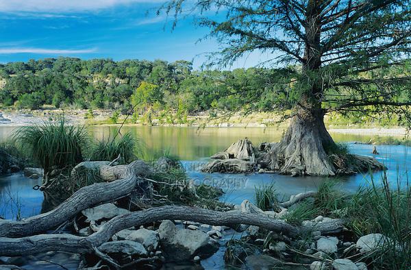 Pedernales River and cypress tree, Pedernales Falls State Park,Texas, USA