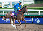 ARCADIA, CA - NOV 02: Victory to Victory, owned by Live Oak Plantation and trained by Mark E. Casse, exercises in preparation for the Breeders' Cup Juvenile Fillies Turf at Santa Anita Park on November 2, 2016 in Arcadia, California. (Photo by Douglas DeFelice/Eclipse Sportswire/Breeders Cup)
