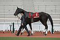Horse Racing: Tulip Sho