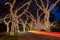 A long exposure of a car's taillights passing through trees adorned with Christmas lights in Wailea, Maui.