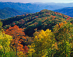 Great Smoky Mountains National Park, TN/NC<br /> Early fall colors in the upper elevations of the Smoky Mountains with Deep Creek Valley in the distance