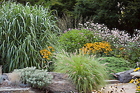 Pennisetum alopecuroides (Fountain grass) with Miscanthus sinensis (left) and flowering perennials in Kurt Bluemel's summer meadow garden Maryland